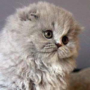 chatons-11
